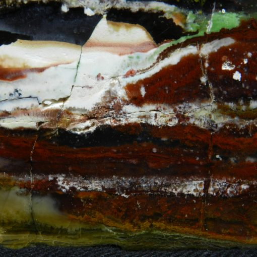 Full frame close up image of Indonesian Petrified Wood