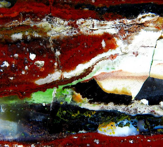 Blog post banner of Indonesian Petrified Wood