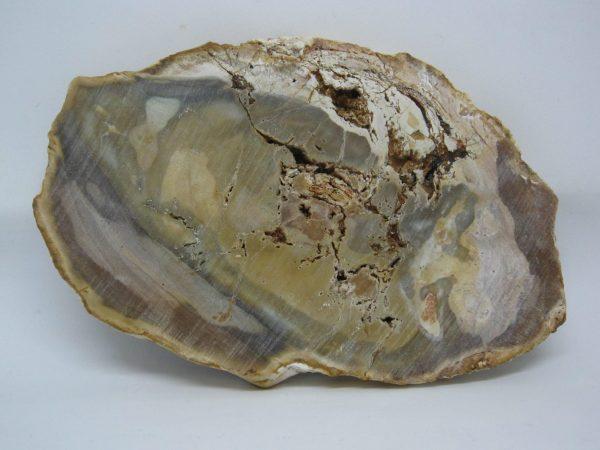 Madagascan Petrified Wood unpolished reverse