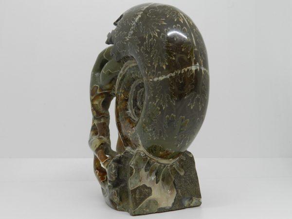 Ammonite Carving