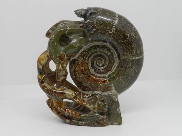 Fossilised Ammonite