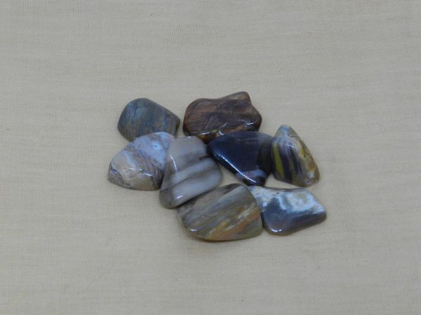 Fossilised Wood Tumblestones